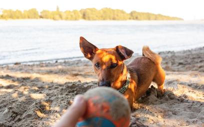 Nie dla psa miejska plaża? RPO: to wbrew przepisom