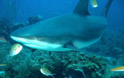 Łososiowate, czyli rekin na talerzu