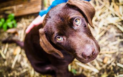 Prawa zwierząt: porzucanie i odbieranie trzeba uregulować