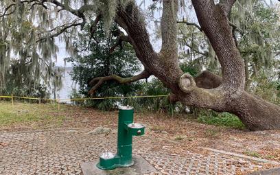 Węże opanowały park na Florydzie. Część terenu zamknięto