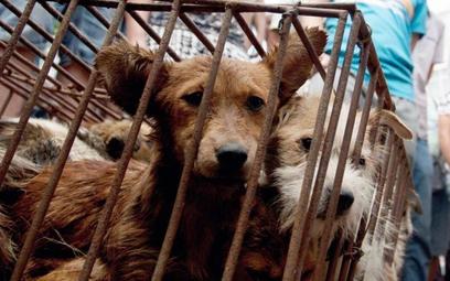 W Yulin, leżącym w sąsiadującej z Guandgdong prowincji Kuangsi, odbywa się festiwal psiego mięsa, op