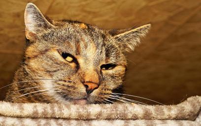 Rosja: kot nie kradł prądu