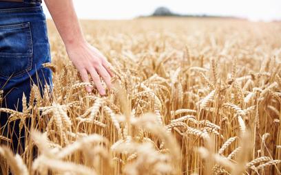 Zupełnie niezły obraz polskiego rolnictwa po transformacji