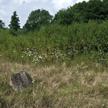 W ostanich pięciu latach porządkowanych było 120 cmentarzy żydowskich
