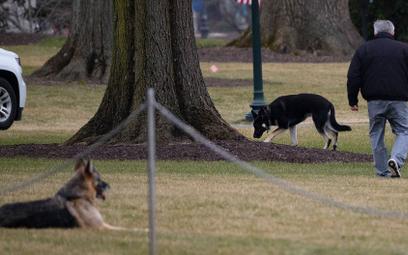 Agent Secret Service ugryziony, psy Joe Bidena odesłane z Białego Domu