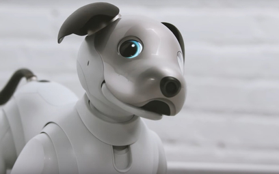 Pies-robot włączy pralkę, pokieruje domem