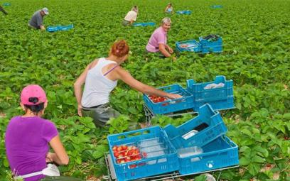 Ponad milion ukraińców może przyjechać w tym roku do polski do pracy