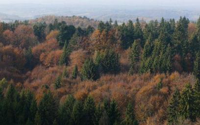 Posłanki Lewicy: Lasy należą do nas – obywateli i obywatelek