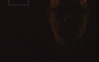 Brian Eno przez kwadrans lub 10 godzin
