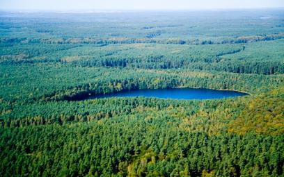 3 hektary lasu rocznie oszczędzi KGHM dzięki digitalizacji dokumentów
