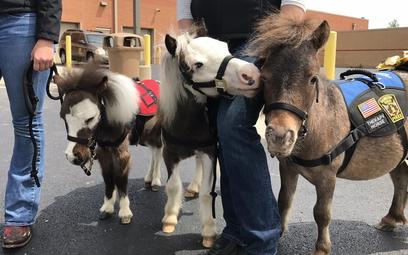 Amerykańskie lotnisko wprowadza terapię końmi