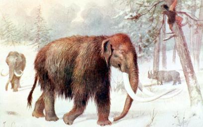 Mamuty zostały przetrzebione przez ludzkich myśliwych i zmiany klimatu