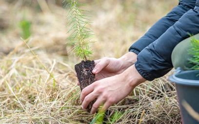Nowe lasy to doskonały pomysł. Ale świat ratują stare drzewa
