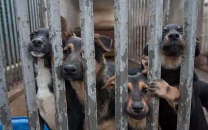 NIK chce poprawy losu bezpańskich zwierząt i postuluje zmiany w prawie