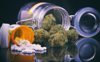 Medyczna marihuana wraca do aptek