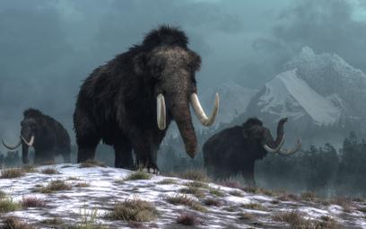 Genetyk i biznesmen chcą wskrzesić mamuta włochatego. Mają fundusze