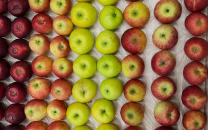 Australia: Najpierw igły w truskawkach, teraz w jabłku