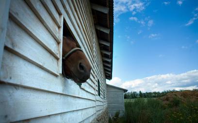 Budynek z boksami dla koni to budynek inwentarski - wyrok WSA w Białymstoku