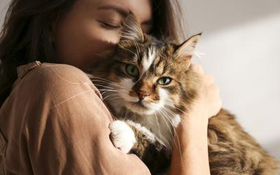 Na kota można wydać majątek. Tak zarabiają na kociarzach