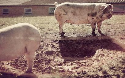 NIK sprawdzi jak traktowane są zwierzęta