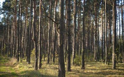 Osiedle domów z drewna lasów