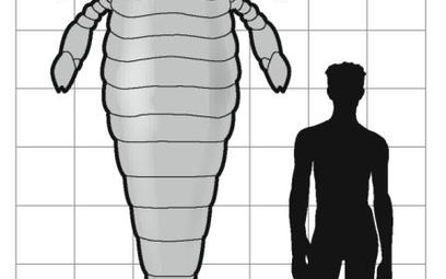 Prehistoryczny skorpion większy od człowieka