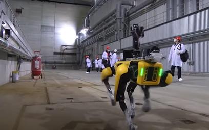 Pies-robot rozpoczął pracę w Czarnobylu