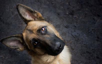 Pomaganie bezdomnym zwierzętom pod kontrolą
