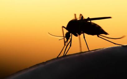 Rosji jesienią grozi fala zakażeń wirusem Zachodniego Nilu