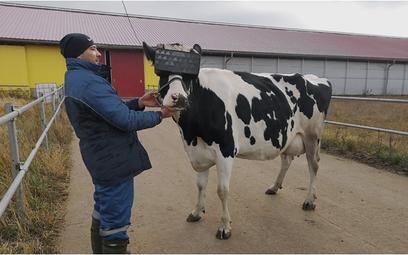 Gogle VR dla krów i muzyka mają zwiększyć produkcję mleka w Rosji