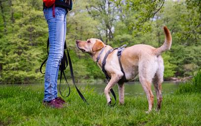 Pies asystujący daje prawo do ulgi