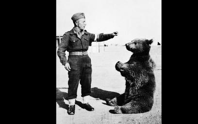 Niedźwiedź Wojtek z polskim żołnierzem.