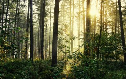 Kraków posadzi las z okazji Nobla dla Olgi Tokarczuk