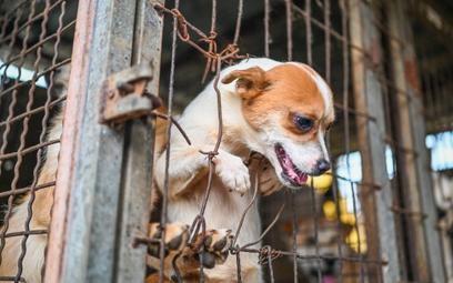 Korea Południowa może zakazać spożywania psiego mięsa
