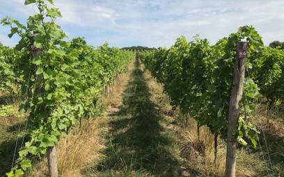 Polskie wina: czego uczymy się od sąsiadów?