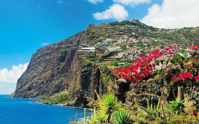 Madera znana jest z tego, że rośnie na niej wiele gatunków kwiatów, w tym strelicje