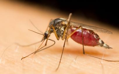 Klęska w wojnie z komarami. Nie tylko Google zawodzi