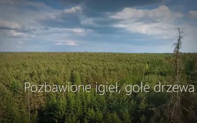 Spot na kanale Lasów Państwowych na YouTube: Milion martwych drzew w Puszczy Białowieskiej
