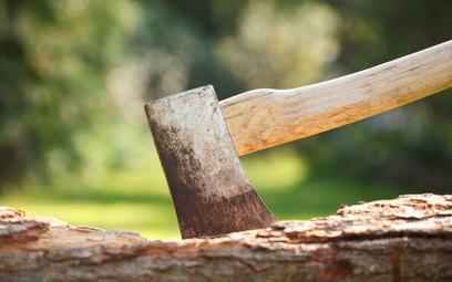Opłata za wycinkę drzew: 10 tys. za pozbycie się dwóch wierzb