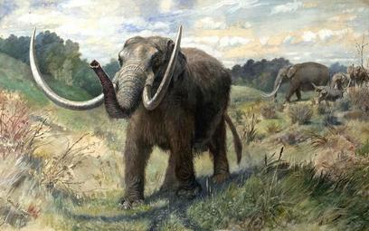 Trochę mamuta żyje w słoniu
