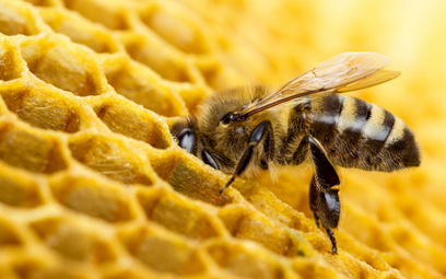 Para z Hiszpanii miała w ścianie sypialni 80 tys. pszczół