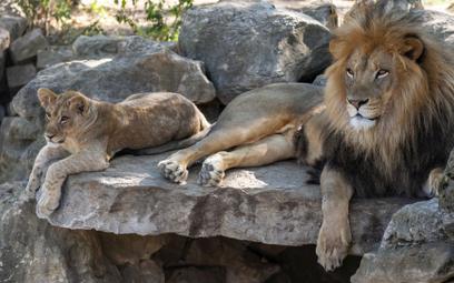Ogrody zoologiczne z Anglii będą musiały zabijać zwierzęta?