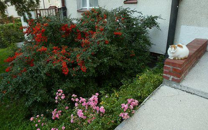 Czy sąsiad ze wspólnoty ma prawo postawić wysoki płot w ogródku przydomowym?