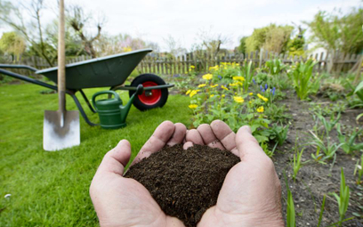 Rolnicy: Oszczędności na sadzonkach bez PIT