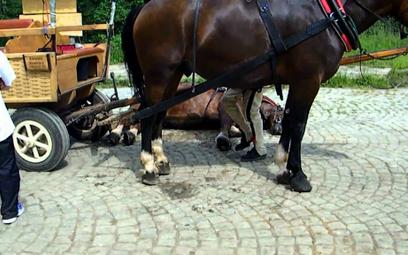Marsz bez podków: Pójdą na bosaka w obronie koni