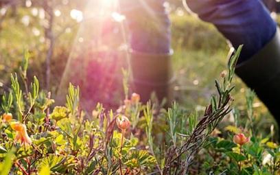 Szwedzka turystyka z ekologicznym znakiem jakości