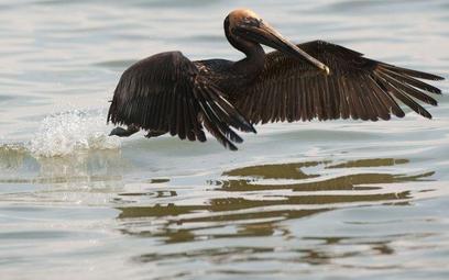 Prezes BP przeprasza za katastrofę ekologiczną