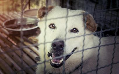 Bezdomności zwierząt nie pomoże ich wyłapywanie