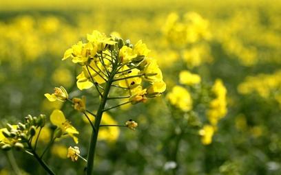 Kwitnie sztuczny obrót biopaliwami w Polsce
