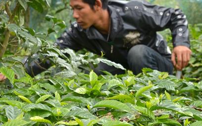 """Kawa pomoże lasom? Badania są obiecujące, jest jedno """"ale"""""""